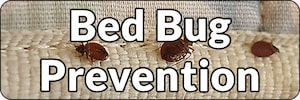 Preventing Bed Bugs Banner