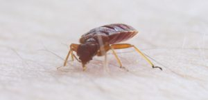 bed bug biting skin