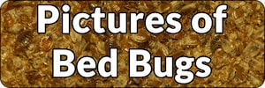 Bed Bug Pictures Banner