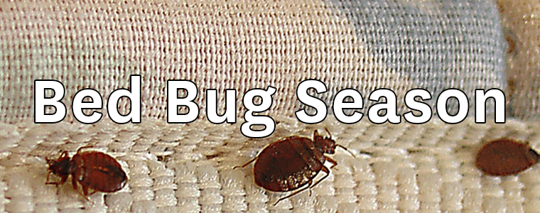 Beware – Summer Is Bed Bug Season