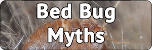 Bed Bug Myths And Misconceptions