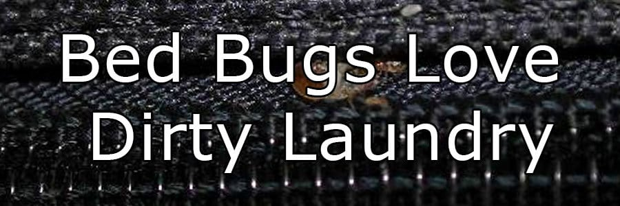 Bed Bugs Travel In Dirty Laundry