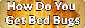 how do you get bed bugs banner