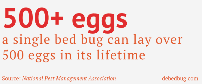 bed bug eggs laid in lifetime