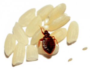 5 Signs Bed Bugs Leave Everywhere They Go Debedbug